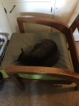 Upholstery Summer